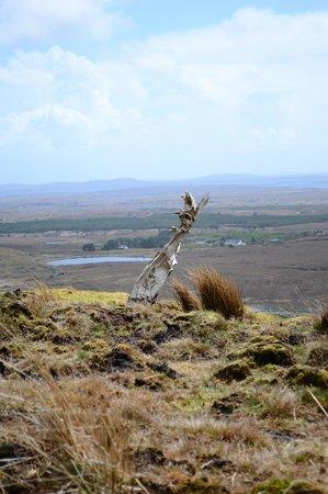 Dan O'Hara's Homestead Farm : A piece of very old bog oak