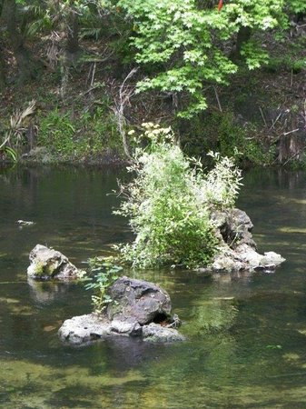 Not a Clue Adventures-Day Walking Tours : Hillsborough River State Park