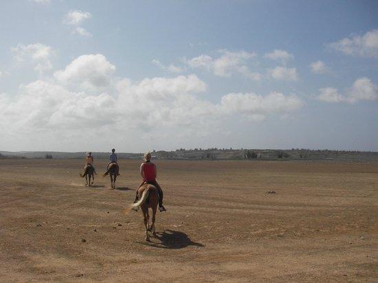Rancho Washikemba horse ranch Bonaire: Omgeving