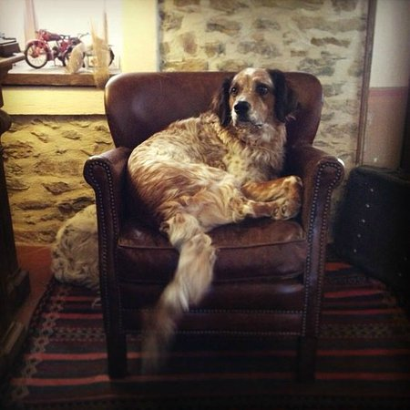 Relais Le Due Matote : Teo Superstar! The dog of B&B owners.