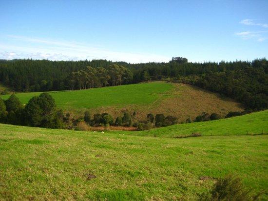 Horse Trek'n: Views on the way up, 2-hr trek