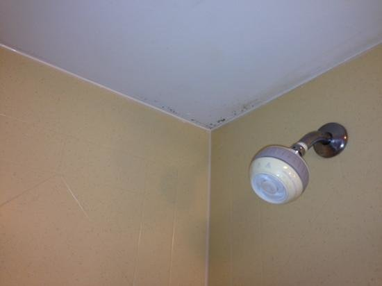 Hampton Inn Birmingham / Mountain Brook : moldy shower