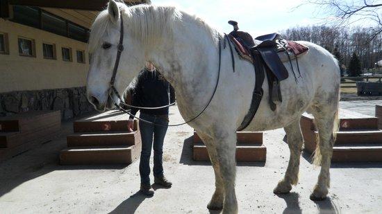 Rocking Horse Ranch Resort: Fluffy