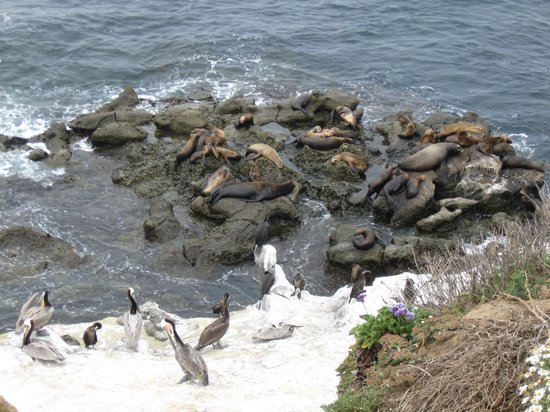 Another Side Of San Diego Tours : Seals on the beach in La Jolla