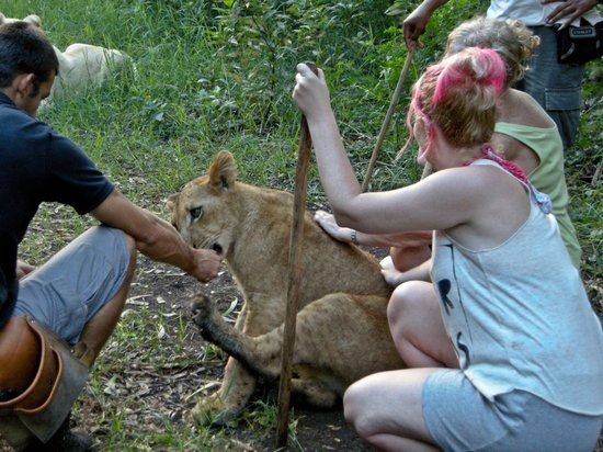 Pearle Beach Resort & Spa: Walking with Lions