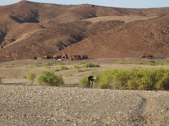Okahirongo Elephant Lodge: Ostrich passing by in front of the lodge
