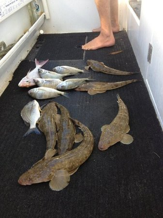 Noosa River Fishing Safaris: Dinner!!