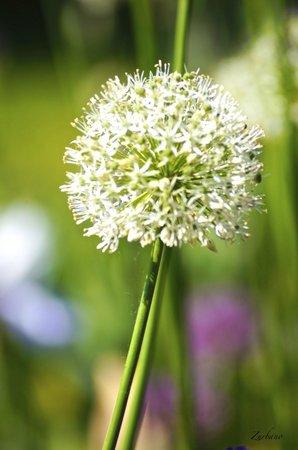 Schreiner's Iris Gardens : Iris