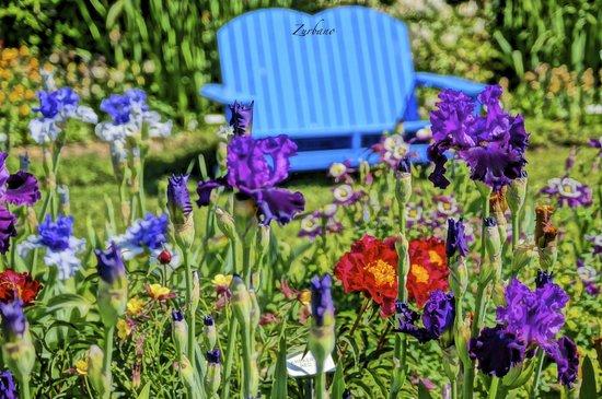 Schreiner's Iris Gardens : Bench and Iris
