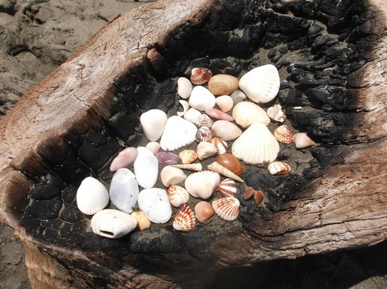Mas Adventures: Sea shells collected on the beach.