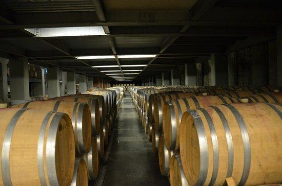 Tasting Campania Day Tours: Wine Tasting in Atripaldi - Underground Cellar