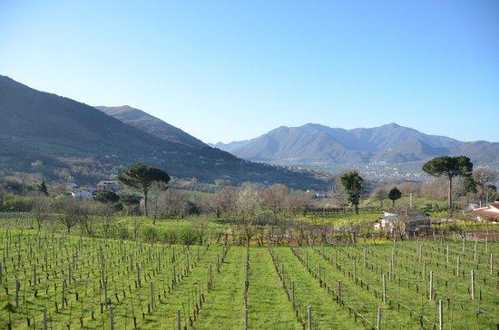 Tasting Campania Day Tours: Atripaldi