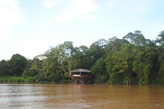 Borneo Nature Lodge : Lodge from the river