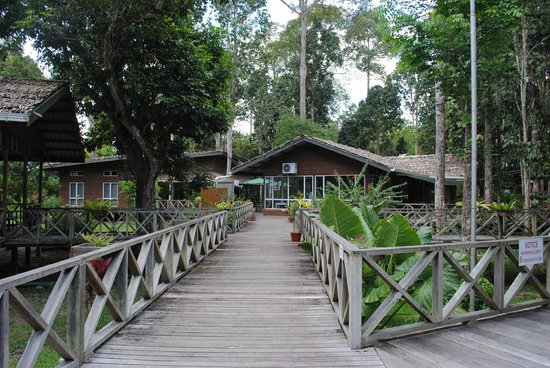 Borneo Nature Lodge : Central connecting boardwalk