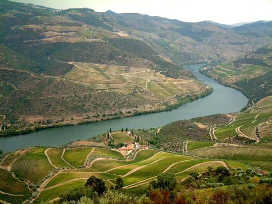The Douro River : Quinta de Roriz