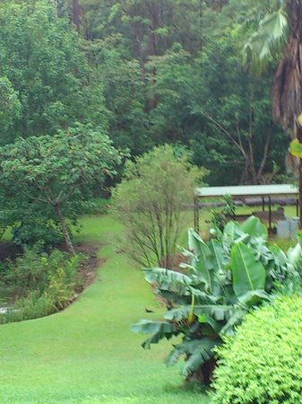 Riviera B&B : Beautiful garden