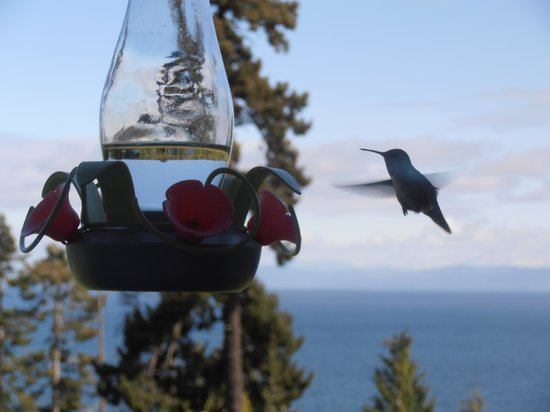 Eagle Landing Bed and Breakfast: nice birds