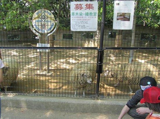 Satsukiyama Zoo: Sheep