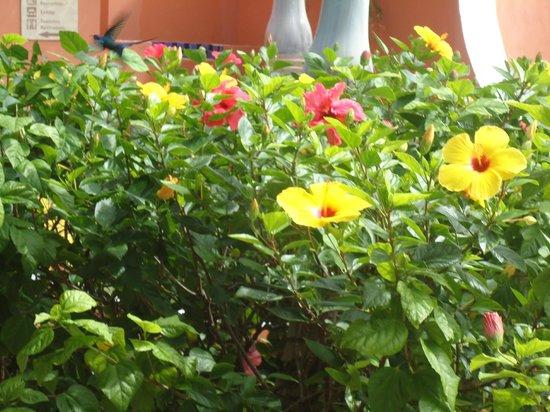 Iberostar Praia do Forte: Flores