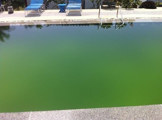 Power Beach Resort: piscine tellement sale qu une odeur de vase s en dégageait. AUCUN ENTRETIEN !