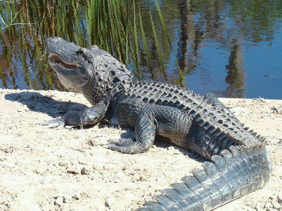 Everglades National Park Boat Tours: another one