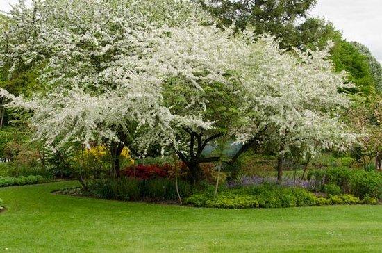 Parc Floral d'Apremont : Pommier en fleurs