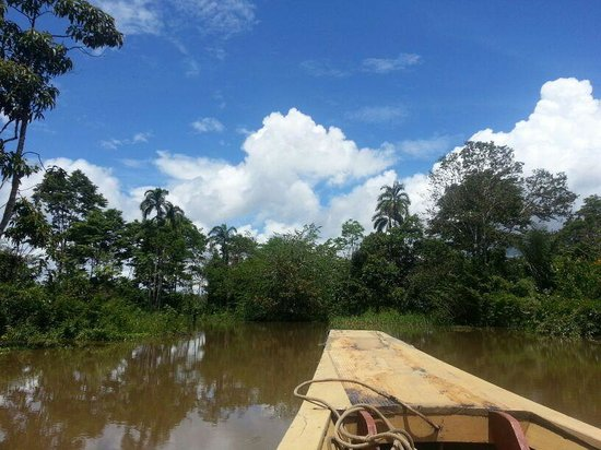 Samiria Ecolodge : Boat ride to find Sloths