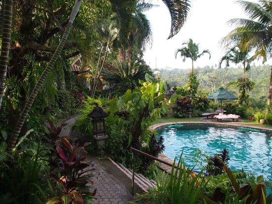Alam Sari: Pool & gardens