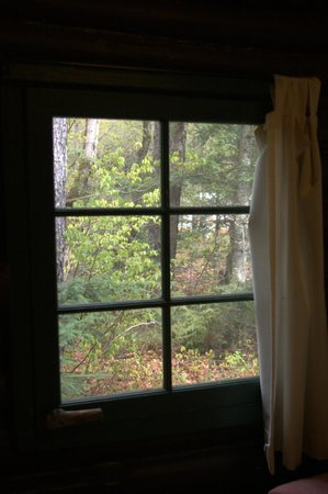 Wolf Den Hostel & Nature Retreat: View from our window