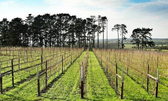 Packwood Country Estate: Vineyard