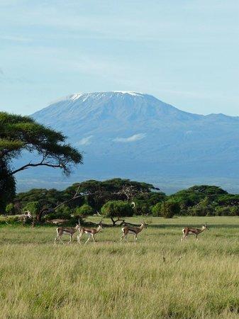 写真Kibo Safari Camp枚