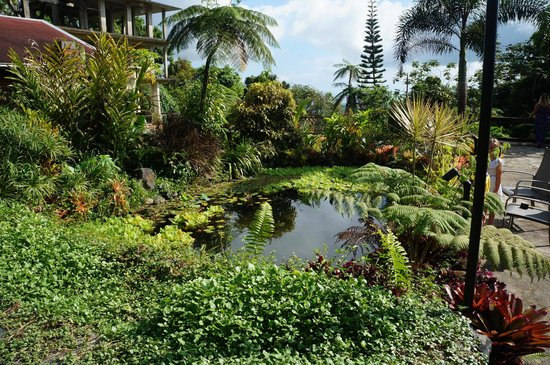 Rainforest Inn: The pond