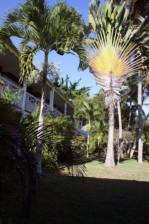 La Maison Creole : le jardin qui donne sur la salle du petit déjeuner