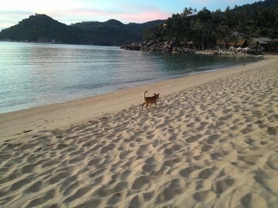 Thong Nai Pan Noi: beach dog