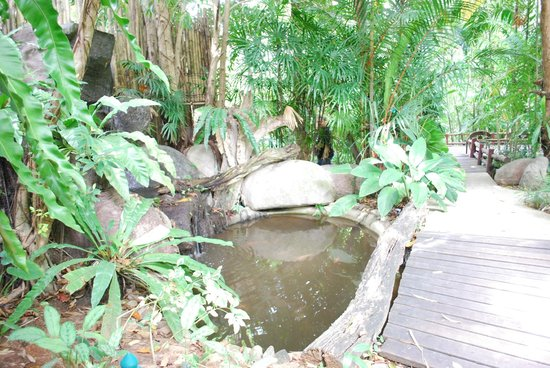 Somkiet Buri Resort: Fish pond beside the walkway heading to the rooms