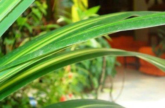 Pueblo Verde: Rodeado de naturaleza.
