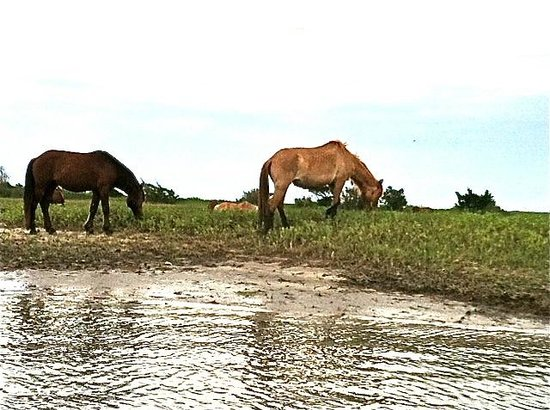 Beaufort, Caroline du Nord : Wild Horse of Carrot Island from the Waterbug