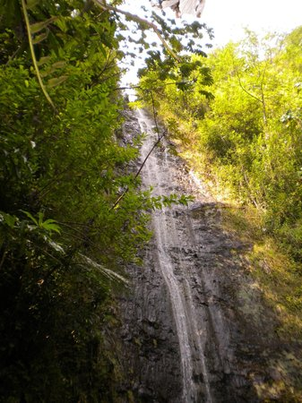 Manoa Falls : The Falls