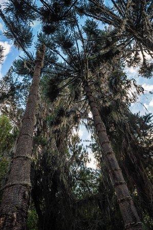 Hacienda Piman Garden Hotel: Piman's centenial forest