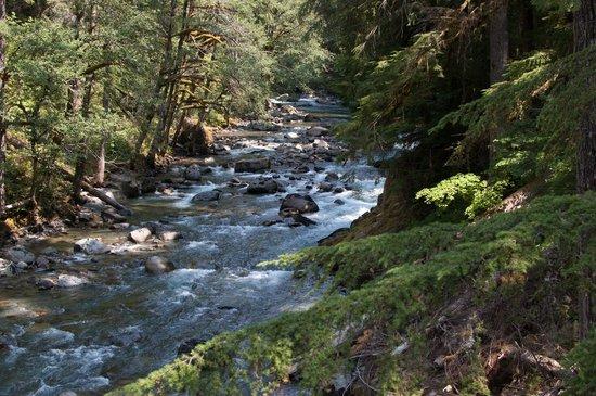Ohanapecosh Campground : Ohanapecosh River