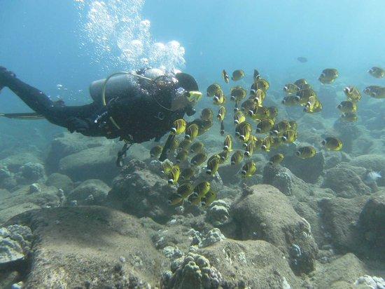 Kauai Down Under Dive Team : More trutles