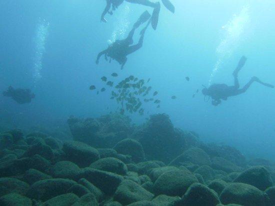 Kauai Down Under Dive Team : Great Dives