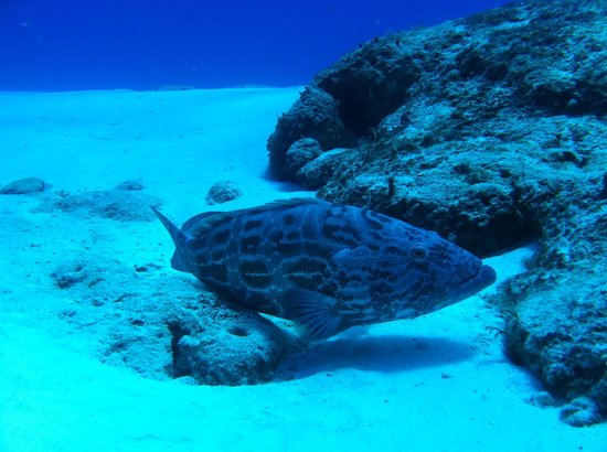 3 Hermanos Cozumel fishing: Grouper on the bottom