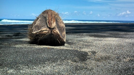 Rosalie Bay Resort: Found this grumpy old fella on the beach at Rosalie Bay