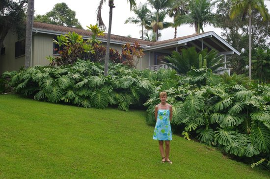 Areca Palms Estate Bed and Breakfast: out for a morning stroll - view from garden area of house