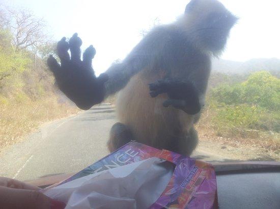 Hotel Kalyan: Monkey hehehe .....lolz......