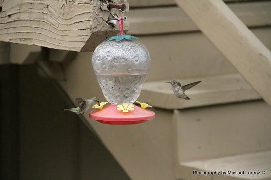 Restful Nest Bed and Breakfast: Hummingbirds