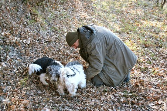 Truffle Hunting at Les Pastras : Marco with our truffle dogs Pupuce amd Mirieu wonderful