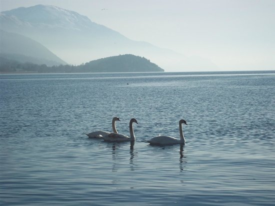 le lac picture of lake ohrid ohrid tripadvisor. Black Bedroom Furniture Sets. Home Design Ideas