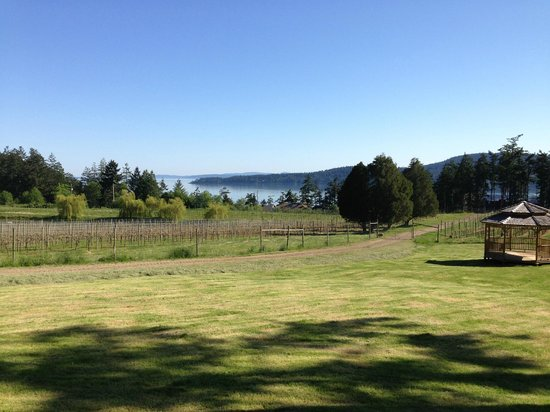 Saturna Island Family Estate Winery: View from the tasting room/bistro